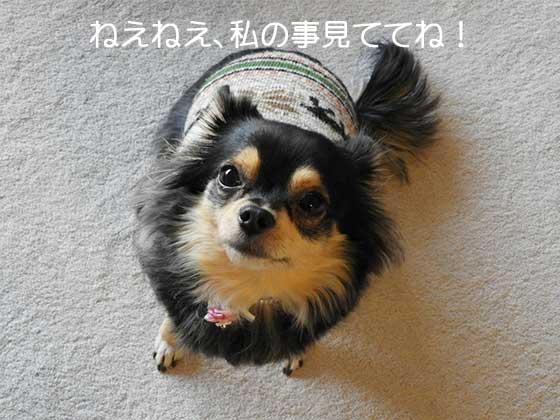 音に敏感な犬