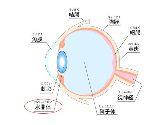視力回復で気をつける点と目の構造 水晶体