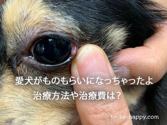 犬のものもらいの治療費、治療方法、治療薬は