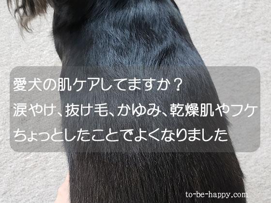 犬の抜け毛、かゆみ、乾燥肌、フケの肌ケア方法は?
