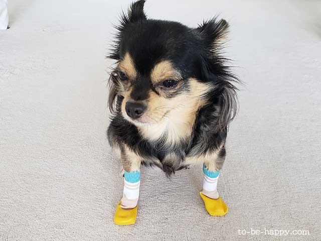 愛犬の防災グッズ、靴下