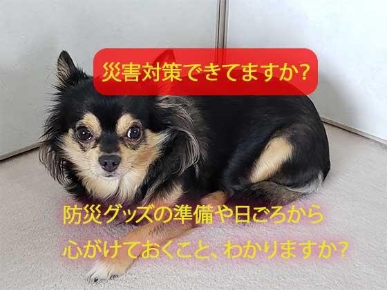愛犬のための防災グッズや準備