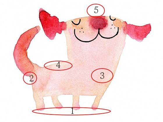 犬の洗い方順番