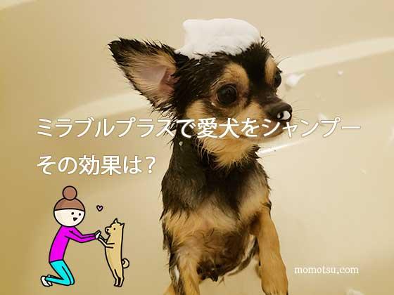 ミラブルプラスで愛犬をシャンプーした口コミ