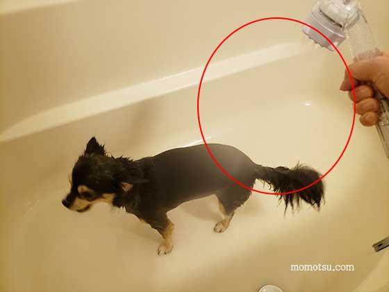 ミラブルプラスで愛犬をシャンプーする様子