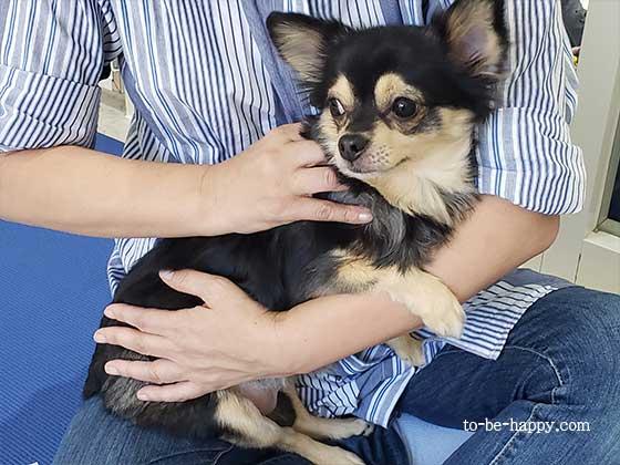 犬の整体と体管理